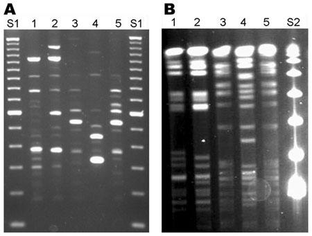 Byl test na Covid-19 určen k detekci viru?